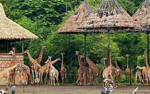 Safari Tour while in your van